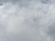 An eagle overhead